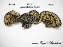 RECO_Anerythristic_Pastel.jpg